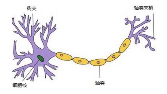 神经网络浅讲:从神经元到深度学习 -人工智能